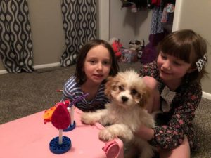 Bentley The Cavapoo Having A Tea Party!
