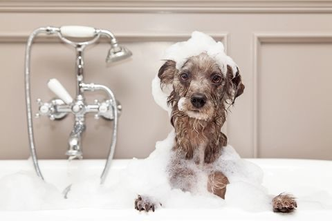 How Often Should My Puppy Get A Bath?